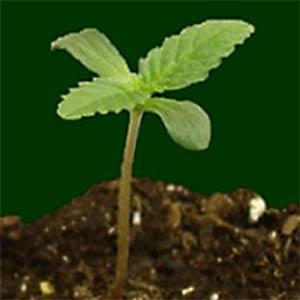 05-seedling