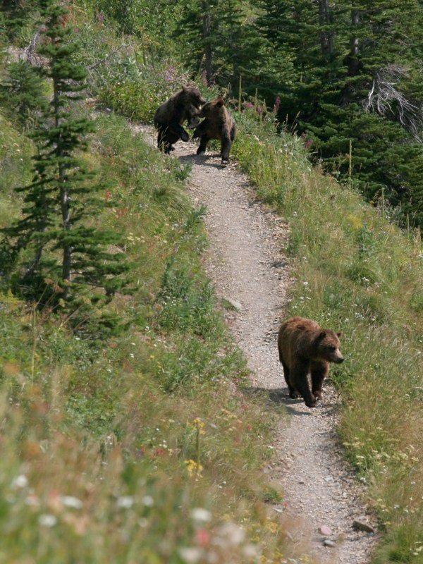 Be Bear Aware 3