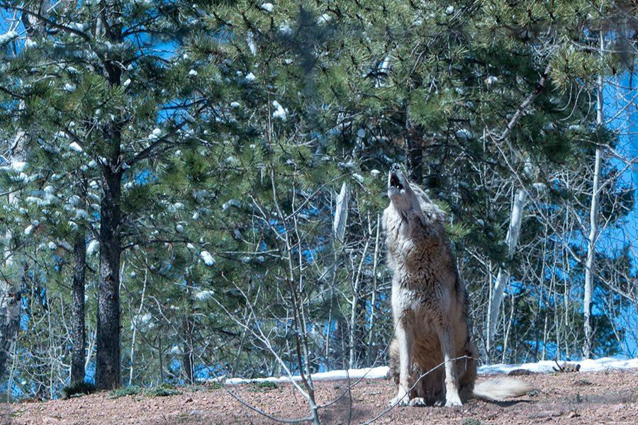 Wolf and Wildlfie Center OnD