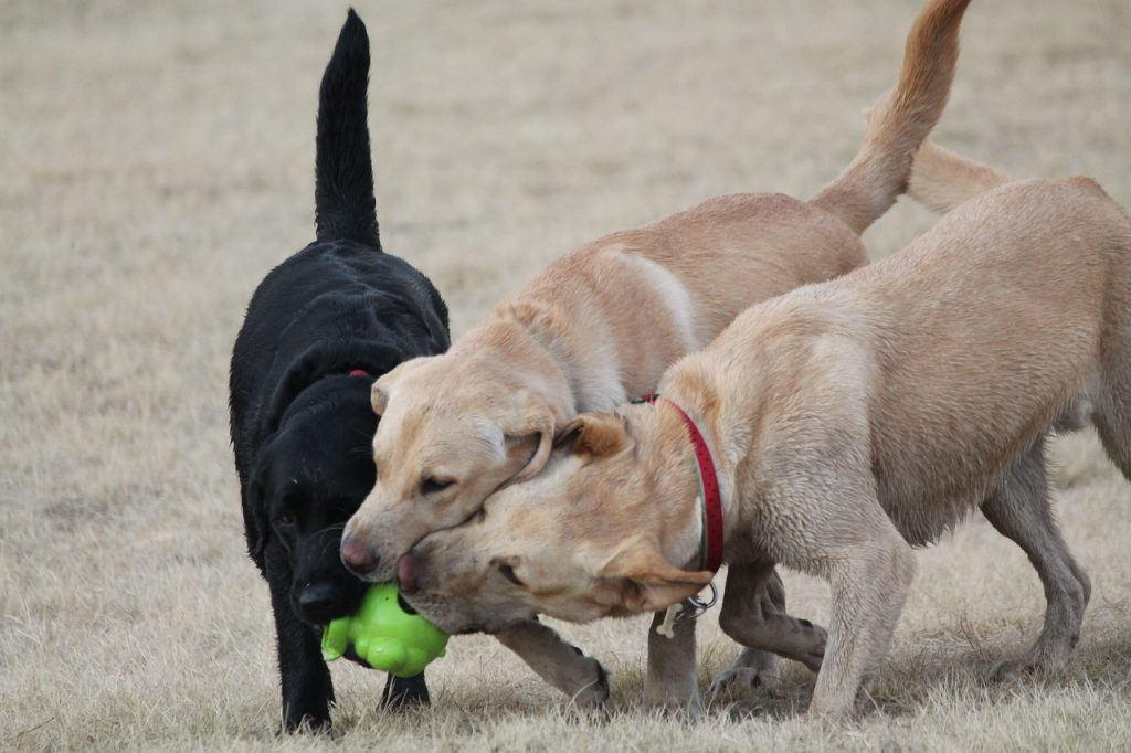 dogs-2690582_1280