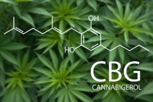 Cannafitness_CBG
