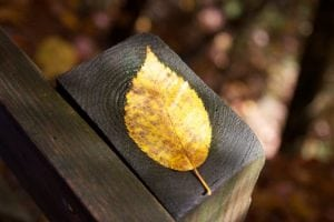 Fall leaf foliage