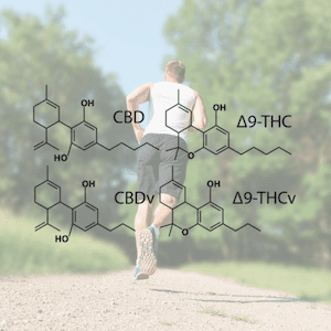 Cannabinoids for fitness feature