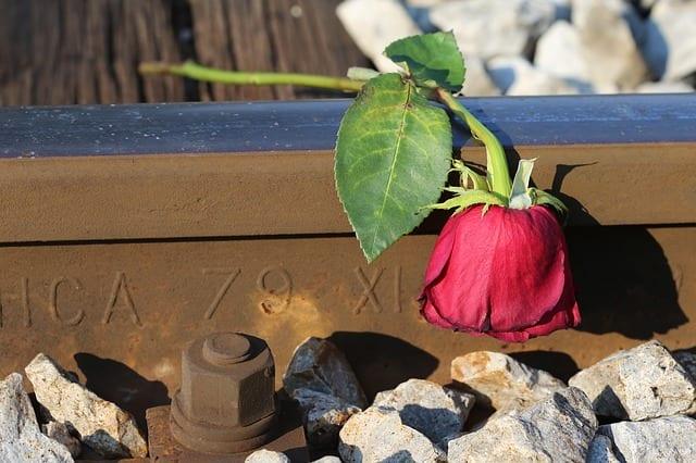 sad-red-rose-3629578_640