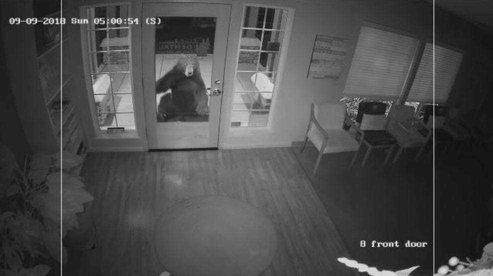 bear burglar
